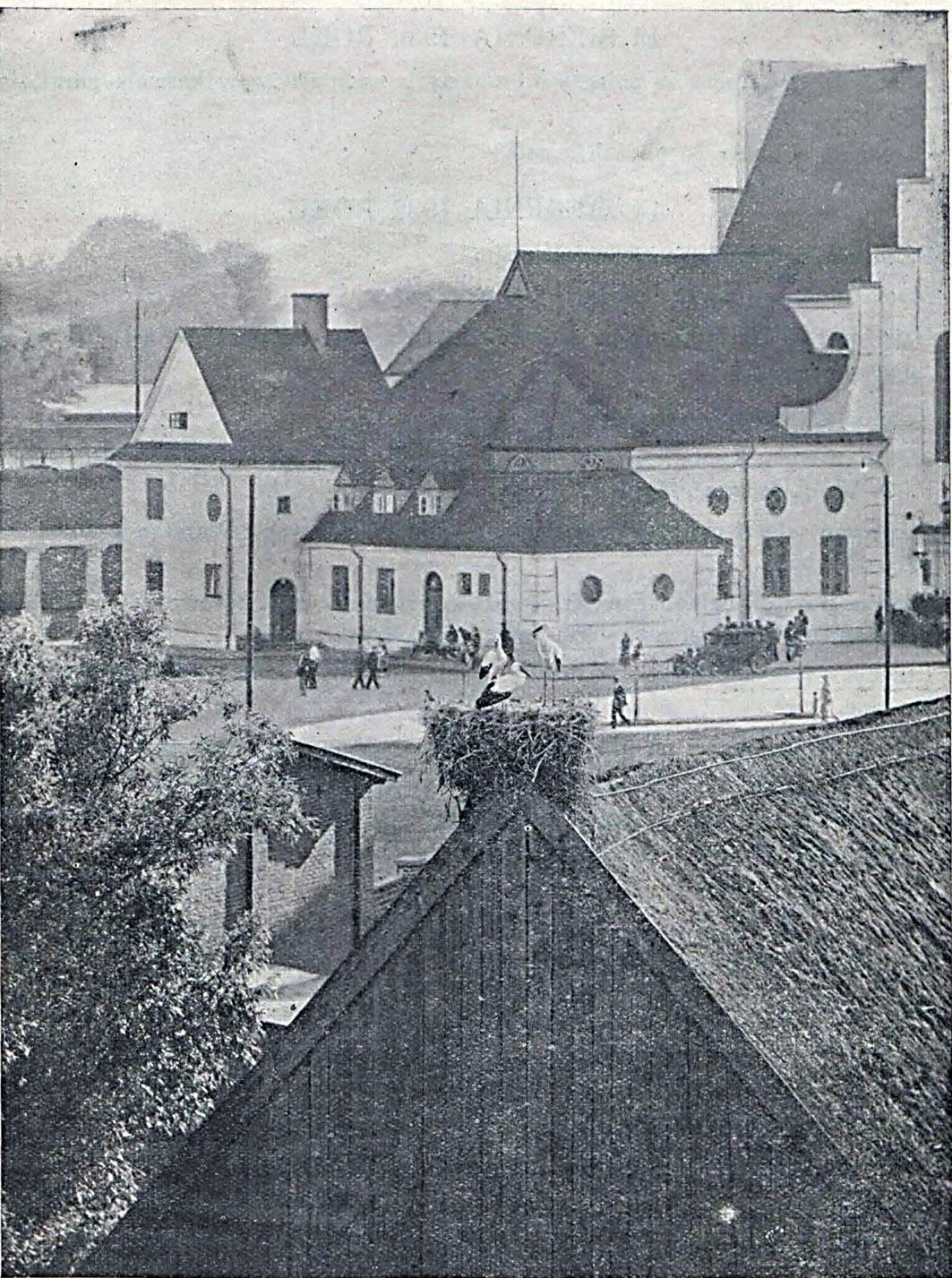 Bociany w Gdyni