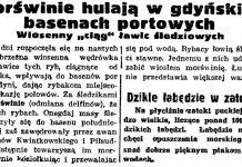 """Morświnie hulają w gdyńskich basenach portowych. Wiosenny """"ciąg"""" ławic śledziowych // Gazeta Gdańska. - 1939, nr 86, s. 2"""