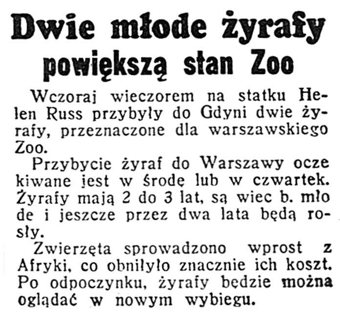 Dwie młode żyrafy powiększą stan Zoo // Dzień Dobry. - 1939